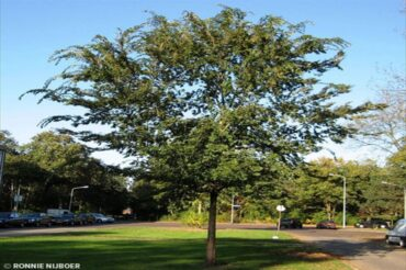 Free Tree Planting & Maintenance Workshop by Tom Ingersoll on April 17th