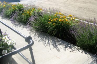 GBHS Barn & Yard Sale on June 26 was a big hit. Free lavender is still available!